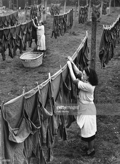 Laundry workers hanging out army shirts to dry, from Aldershot Barracks, Surrey. The laundry workers wash 1500 army shirts a week. | Washer Odor? | Smelly Towels? | Stinky Clean Laundry? | http://WasherFan.com | Permanently Eliminate or Prevent Washer & Laundry Odor with Washer Fan™ Breeze™ | #Laundry #WasherOdor