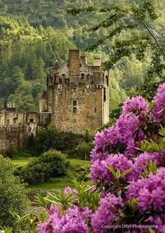 Eilean Donan Castle in Scotland--I remember taking a train through the Highlands and seeing the fabulous wild Rhododendron all along the way. Wow, the Highlands are so beautiful! Beautiful Castles, Beautiful Buildings, Beautiful World, Beautiful Places, The Places Youll Go, Places To See, Eilean Donan, Scottish Castles, English Castles