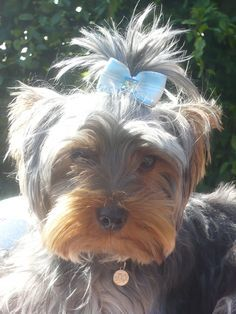 Houston prend la pose avec le noeud Petit Prince pour la plus belle coiffure  de mle