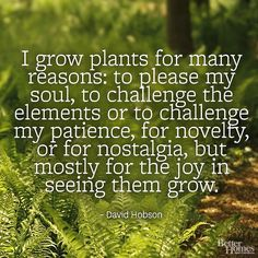 """""""I grow plants for many reasons: to please my soul, to challenge the elements or to challenge my patience, for novelty, or for nostalgia, but mostly for the joy in seeing them grow."""" -David Hobson  More garden quotes: http://www.bhg.com/gardening/garden-quotes/?socsrc=bhgpin042114gardenquotehobson"""