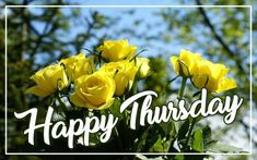 Best Happy Thursday Image with flowers background for Wish Someone A Happy Thursday. Happy Thursday Images, Wishes Images, Flowers, Florals, Flower, Bloemen