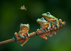 These surreal frog and toad photos look like they're from a sci-fi movie, but…