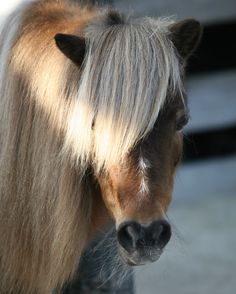 Welsh Pony Beautiful Horses, Animals Beautiful, Welsh Pony, Club, Board, Horse, Pretty Horses, Cutest Animals, Planks