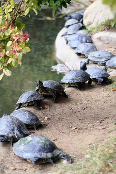 All aboard! Turtle train is movin on.