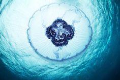 jellyfish-madness-Alexander-Semenov-19