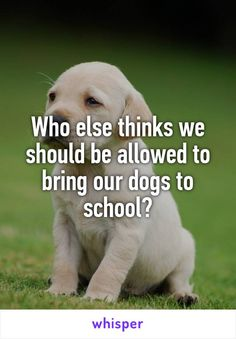 Well if I had a trained puppy then yes that way I can cry when I fail tests get aggravated or emotionally unstable