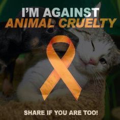 I'm against animal cruelity!