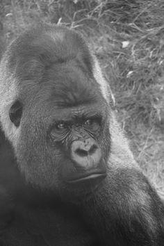 photo taken at rotterdam zoo