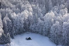 Small wooden house in winter in the mountains surrounded by snow-covered fir trees on the background of the unsharp forest. Fundata, Romania.