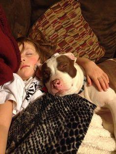 27 Pit Bulls Who Will Definitely Brighten Your Day #pitbull