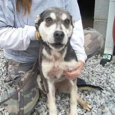 A rescue organization, Big Fluffy Rescue, has raised concern for the welfare of animals at the Warren County Tennessee Animal Shelter. It appears that several dogs at the Warren County Animal Shelt...
