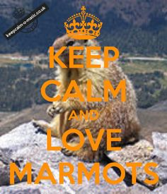 KEEP CALM AND LOVE MARMOTS