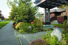 Seattle front garden with pergola,  drought-tolerant shrubs and perennials - plans included