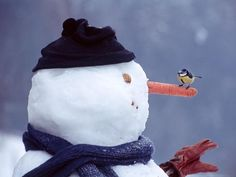 * IN THE MEADOW WE CAN BUILD A SNOWMAN *