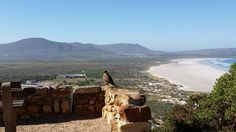 Cape Town South Africa, Grand Canyon, Landscapes, Mom, Places, Nature, Travel, Animals, Paisajes