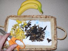 Fertilizer with banana for roses Dry the peels in the oven at around 90* for 10 minutes (watch it in case it's done sooner)
