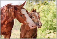 horse / brotherly love