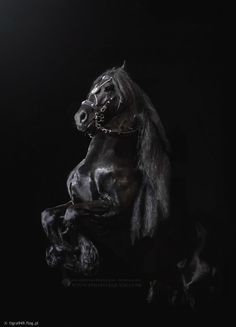 THE DARK KNIGHT  Friesian? #horses