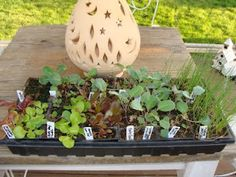 Starting Plants From Seeds: everything you wanted to know...and then some.