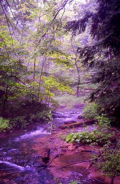 "lori-rocks: ""The Wonder Of Nature by John Stuart Webbstock """