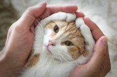 猫の魅力を、無限大にアップさせるポーズが発見される « 猫ジャーナル 猫ジャーナル
