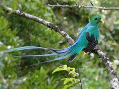 Resultado de imagen de quetzal wallpapers