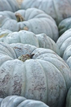 ".Oh how I love these new ""greenish blue"" pumpkins"