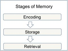 memories essay Free Essays on My High School Expectations - Net Essays, case . Memory Psychology, Cognitive Psychology, Psychology Studies, Educational Psychology, Memories Essay, Episodic Memory, Psychology Experiments, Ap Psych, Types Of Memory