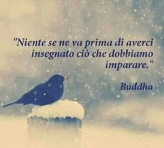 Citazioni Buddha Poetry Quotes, Words Quotes, Motivational Quotes, Inspirational Quotes, Daily Wisdom, Italian Quotes, Stream Of Consciousness, Buddha Quote, Something To Remember