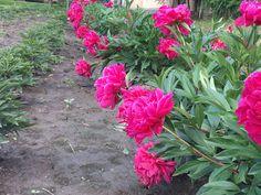 Flowers, Plants, Gardens, Decor, Decoration, Outdoor Gardens, Plant, Decorating, Royal Icing Flowers