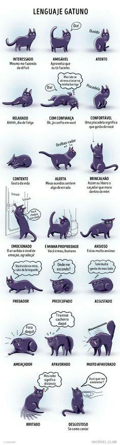 linguagem felina