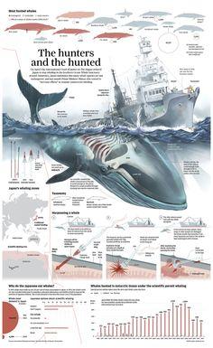 Caçadors de balenes
