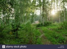 forest village - Google Search Forest Village, Country Roads, Google Search, Plants, Plant, Planets