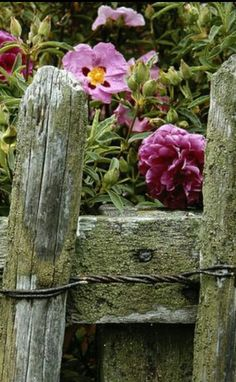 old fence & great flowers <3 RHS