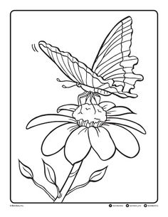 Follow the link below to download this coloring page! http://www.bendonpub.com/upload/coloring-pages/june-2015-butterfly.pdf