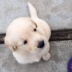 Puppies Discover Awooooo to you too! Awooooo to you too! Cute Little Animals, Cute Funny Animals, Funny Dogs, Cute Cats, Cute Animal Videos, Cute Animal Pictures, Cute Dogs And Puppies, Puppies Puppies, Doggies