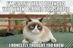 Grumpy cay