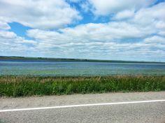 Sky of blue.  Sea of ... blue!  Flax.