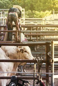 The Hammons Bucking Barrel Practice For Steer Or Bull