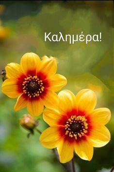 Greek Language, Good Morning, Flowers, Buen Dia, Bonjour, Greek, Royal Icing Flowers, Good Morning Wishes, Flower
