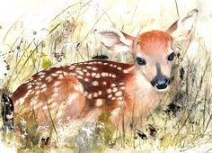 """Fawn"" - by Lucy Newton Watercolor Animals, Watercolor Paintings, Watercolor Deer, Watercolor Projects, Deer Art, Animal Paintings, Artist Art, Unique Art, Art Pictures"