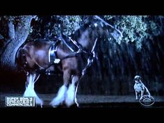 #1 Superbowl Commercial of ALL time....Team Clydesdale Budweiser