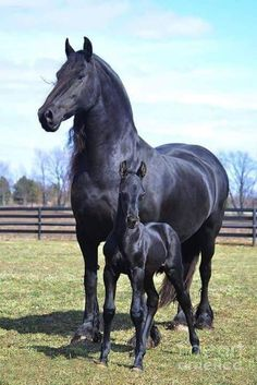 Draft Horses, Baby Horses, Cute Horses, Wild Horses, Horse Love, Ponys, All The Pretty Horses, Beautiful Horses, Animals Beautiful