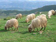 Ovejas! En el pasado, lana, leche, pescado y agricultura eran una parte grande de la economía de Asturias. Hoy en día, minería y acero son parte integrales de la economía. (Las ovejas han sobrevivido!)