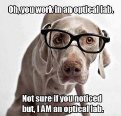 I Has A Hotdog - weimaraner - weimaraner Optometry Humor, Optometry Office, Eye Jokes, Lab Humor, John Rambo, Hipster Dog, Dog Insurance, Puppies And Kitties, Friday Humor