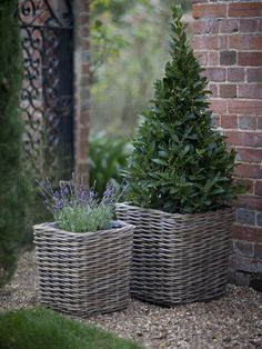 Best garden planters and pots choices. Small garden planters and pots from rattan. Rattan Planters, Basket Planters, Garden Planters, Wicker Baskets, Rustic Planters, Balcony Garden, Container Plants, Container Gardening, Square Planters