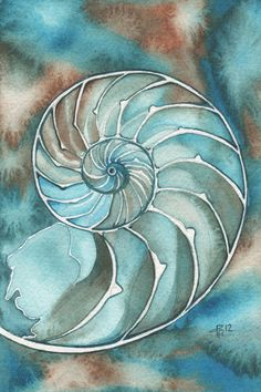 NAUTILUS 4 x 6 print of detailed watercolour by DeepColouredWater on etsy, $4.99 - GORGEOUS!