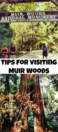 Top tips for seeing those Redwood trees in Muir Woods. #travel #sanfrancisco