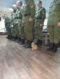 Military cat - your daily dose of funny cats - cute kittens - pet memes - pets in clothes - kitty breeds - sweet animal pictures - perfect photos for cat moms Cute Little Animals, Cute Funny Animals, Funny Animal Memes, Funny Animal Pictures, Pet Memes, Funny Memes, Meme Meme, Memes Humor, Hilarious
