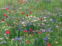Google Image Result for http://3.bp.blogspot.com/_g1QYyfodh08/TFC98ykRieI/AAAAAAAAEOY/bWPMucwHYn8/s1600/wildflowers%2B3.jpg